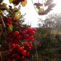 Осень :: Анна Калязина