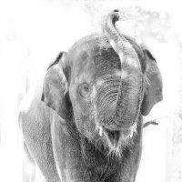 слон - зоо :: Ирина Сафонова
