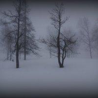 Весна проходит мимо :: Валерий Струк
