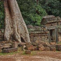 Шагающие деревья. Камбоджа. :: Natalia Furina