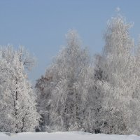 Деревья в зимнем парке :: Сергей Тагиров