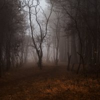 Берегите лес :: Анна Брацукова