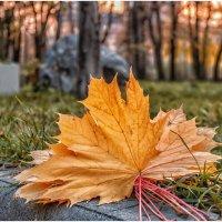 Рыжая осень :: Олег Стасенко