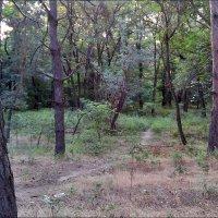 Природа в июле :: Нина Корешкова