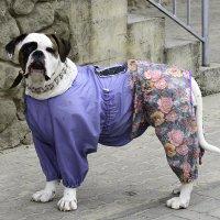 Пёс :: Игорь Денисов