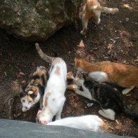 Кошки киприотки обедают мороженым :: Виталий  Селиванов