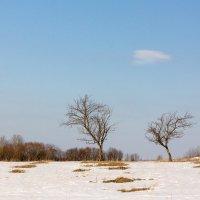 Игры с облачком :: Татьяна Копосова