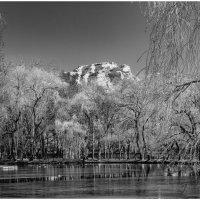 Чёрно-белая весна. :: Олег Стасенко