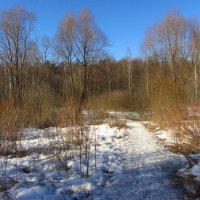 Еще в лесах белеет снег :: Андрей Лукьянов