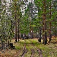 По весенним дорожкам :: Сергей Чиняев