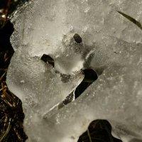 Зима уходит. :: Andy Bayt