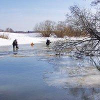 На реке Шерна. :: Ирина Нафаня