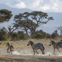 Африканские лошадки :: Марина Мудрова