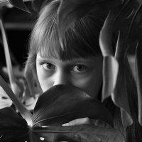 Сквозь листву :: Дарья Накрайникова