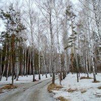 Лесными дорогами . Весна. :: Мила Бовкун