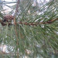 Дождик весной :: Serg
