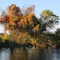Осенний апрельский день на реке Замбези. :: Николай Карандашев