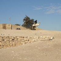 Египет :: Ирина Телегина
