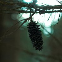 Тёмный лес :: Людмила Ильина