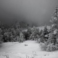 Александр Кожухов - Серый туманный день