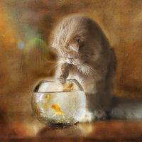 Персик с золотой рыбкой :: Елена Деркач