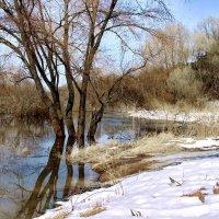 Застенчиво вторжение воды... :: Лесо-Вед (Баранов)