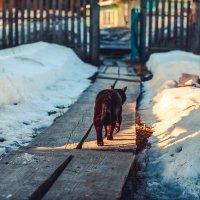 Мартовский кот :: Сергей Смирнов