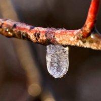Замерзшая капелька воды :: Оксана Лада
