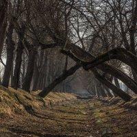 Там на неведомых дорожках . . . :: Наталья Иванова