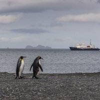 Пингвины и судно :: Alexey alexeyseafarer@gmail.com