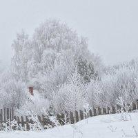 Когда деревья становятся белыми :: Алексей Сычёв