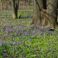 Весна идет :: Elena Ignatova