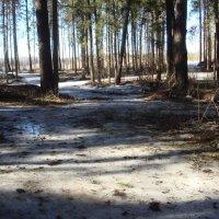 весенний лес :: helga 2015