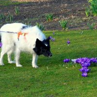 Собака :: Nina Yudicheva