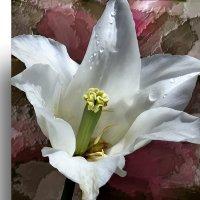 White flower. :: Аnatoly Polyakov