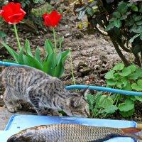 Не тронь..это моя рыбка! :: Юрий Владимирович