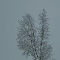 Зимнее дерево :: Марионэлла Сигнаевская