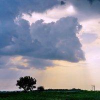Крокодил солнце в небе проглотил :: Валентина Данилова