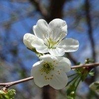 Весна :: azer Zade