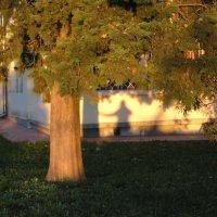 Одинокая тень :: Булаткина Светлана