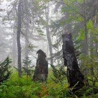 Утро в лесу :: Сергей Чиняев