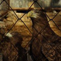Тоска степного орла :: Ольга