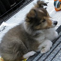 Puppy's Lullaby on the street. :: Tatiana Golubinskaia