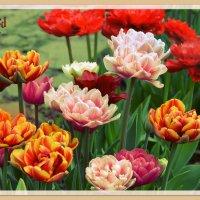 Тюльпаны в День Рождения :: Ирина Falcone