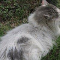 Бело-серый кот :: Дмитрий Никитин
