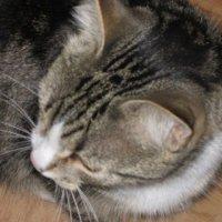 Соседский кот Кузька :: Дмитрий Никитин