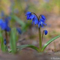 Нежное дыхание весны :: Сергей