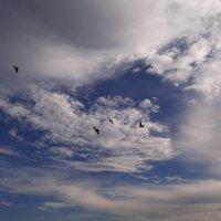 Огромное небо... :: Елена Тренкеншу