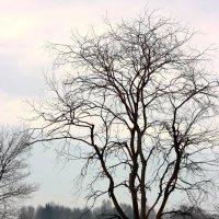 Дерево :: Вячеслав Ложкин