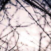 Охота на белок :: Максим Каплун